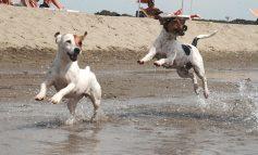 CINOFILIA, CORSO DI FORMAZIONE DOG MANAGER IHOD